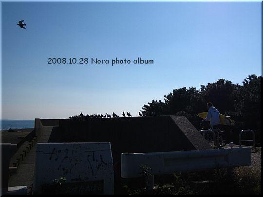 2008.10.28平塚の海 (1).JPG