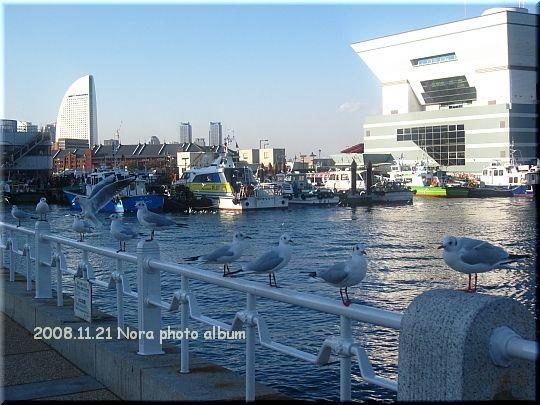 2008.11.21みなとみらい (12).JPG
