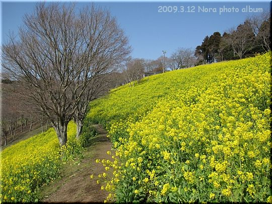 2009.03.12マザー牧場 (3).JPG