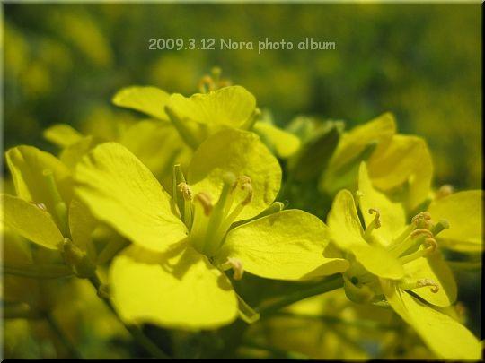 2009.03.12マザー牧場 (4).JPG