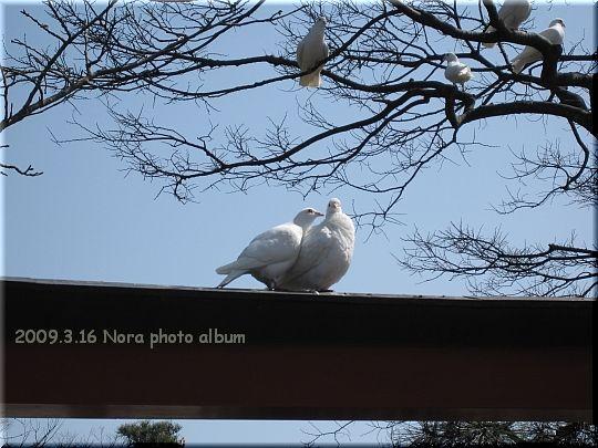 2009.03.16鎌倉 (5).JPG