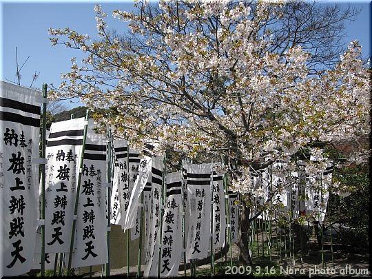 2009.03.16鎌倉 (6).JPG