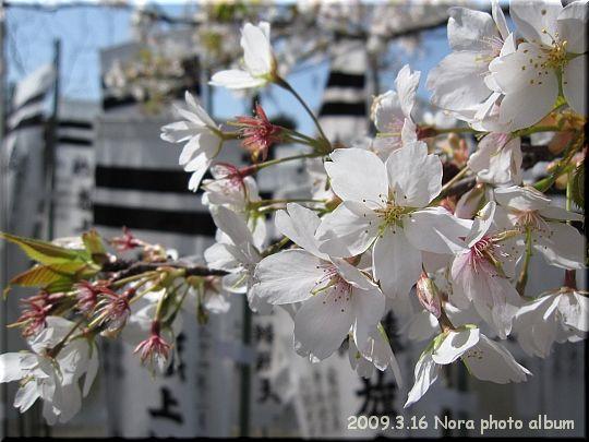 2009.03.16鎌倉 (7).JPG