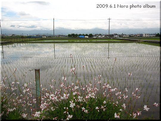 2009.06.01山梨県 (3).JPG