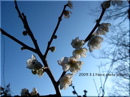 2010.03.01厚木にて.JPG