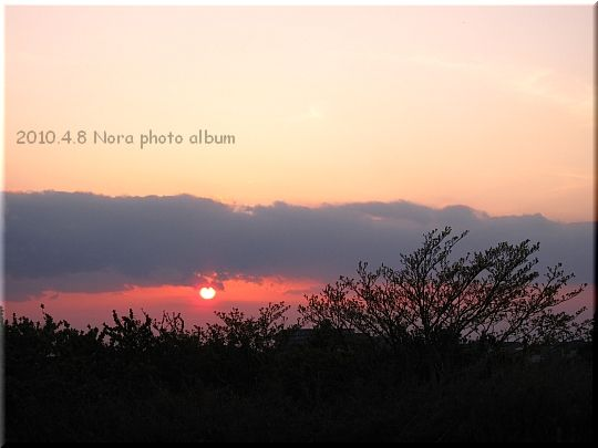 2010.04.08宮川公園 (4).JPG