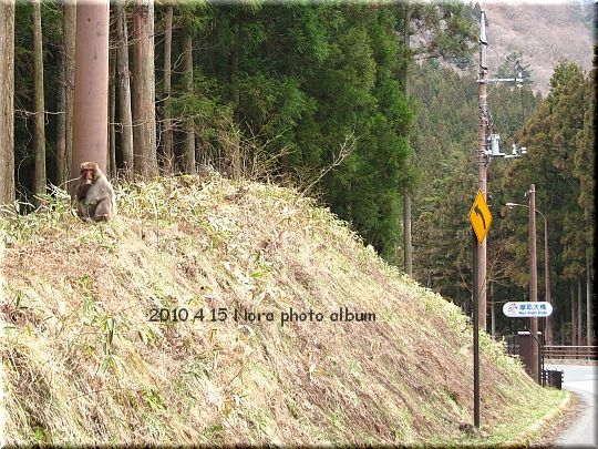 2010.04.15群馬 (9).JPG