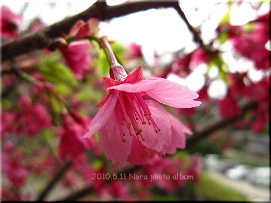 2010.05.10.11長野にて (29).JPG