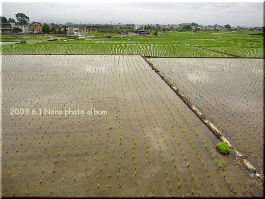 2009.06.01山梨県 (2).JPG