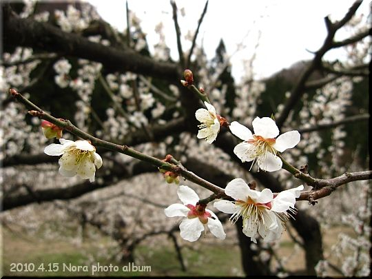 2010.04.15群馬 (3).JPG