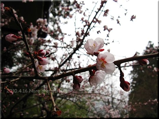 2010.04.16群馬 (1).JPG