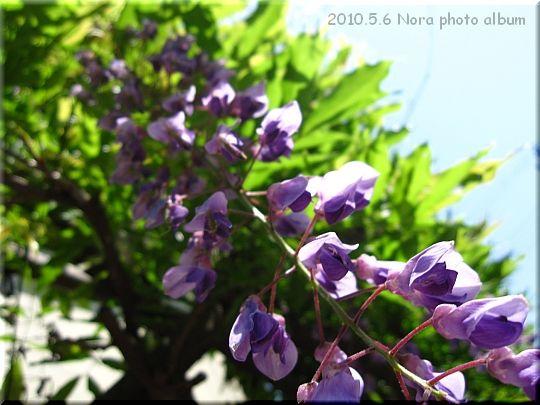 2010.05.06散歩 (1).jpg